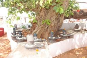Jagrit Shiv Lingas at Ashram